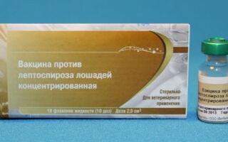 Прививка против лептоспироза для: лошадей, свиней, собак, коров, кошек