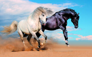 Обязательные прививки для лошадей
