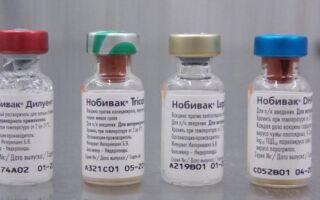 Прививка нобивак для собак: инструкция по применению, виды вакцин