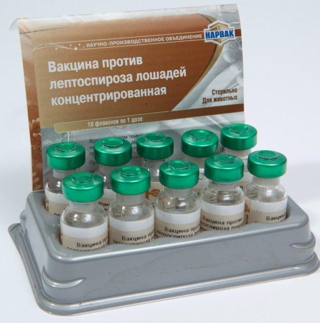 Прививка от лептоспироза