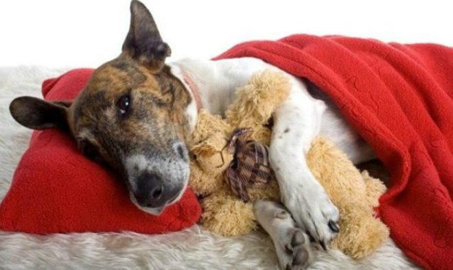 Вакцина от лептоспироза для собак