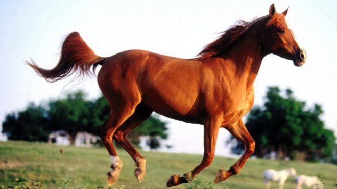 Лептоспироз у лошадей