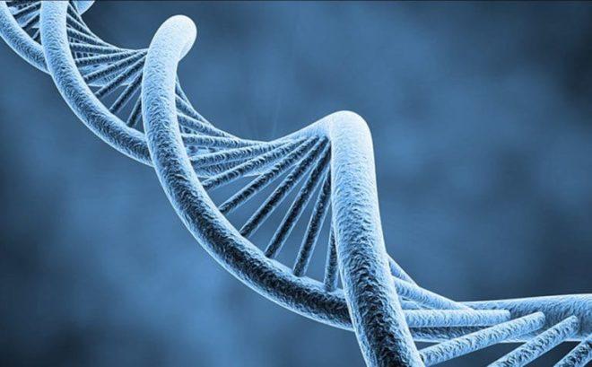 ДНК-4