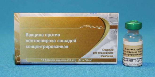Лекарство от лептоспироза
