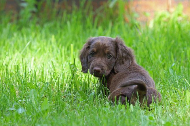 Прививки собакам мыть можно