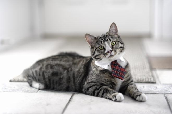Когда котенку делать прививку от чумки. Прививка коту от чумки